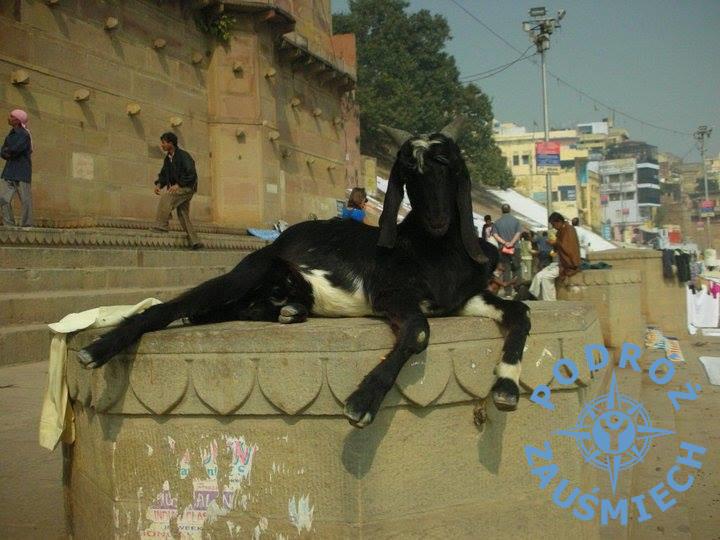 Koza Indie